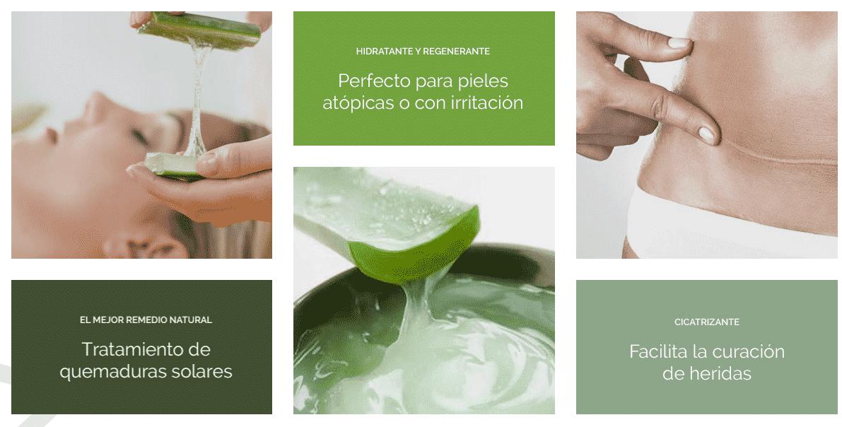 Aloe vera propiedades el poder de la esencia natural en - Variedades de aloe vera ...