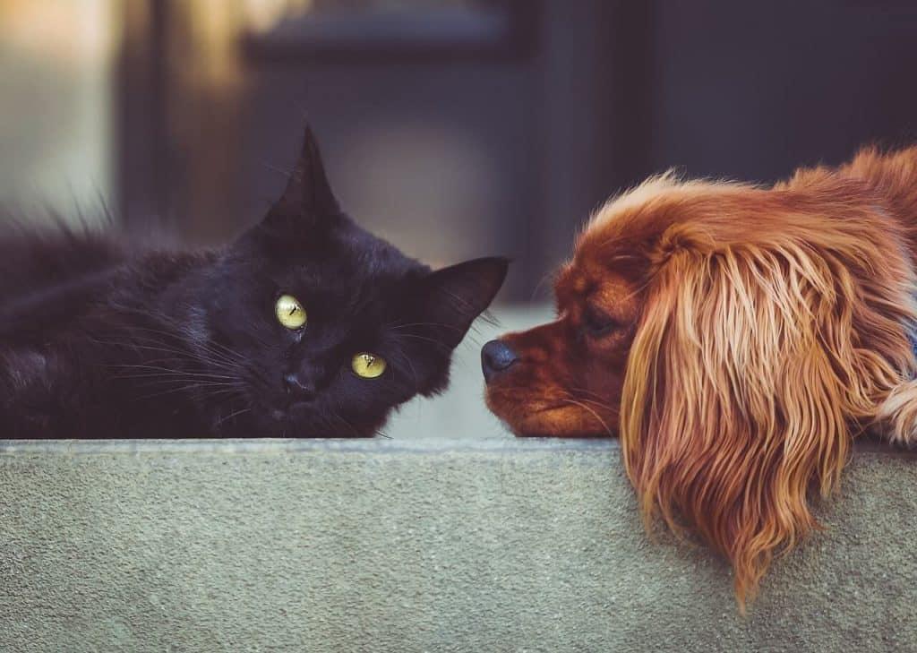 Aloe vera gatos y perros