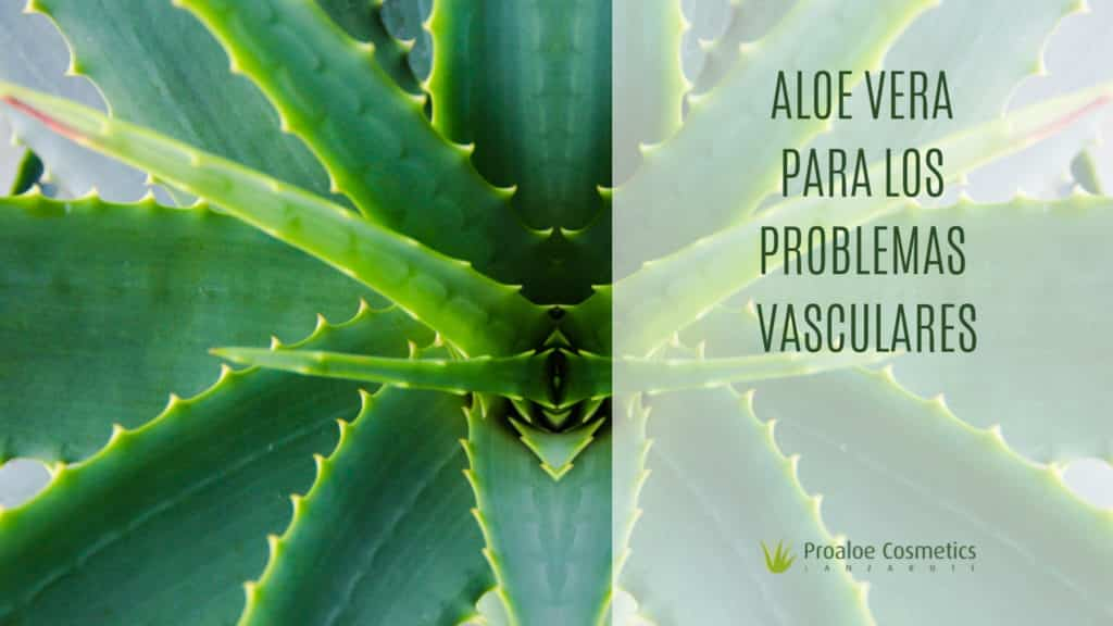 ALOE-VERA-BENEFICIOS-VARICES
